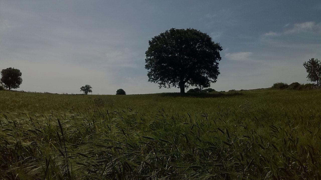 Masseria Dirupo albero prato cover